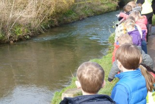 Water vole class