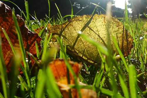 Web autumn leafslider500v2