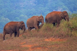 Elephant Procession - I Green