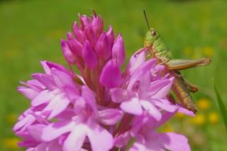 Grasshoper2
