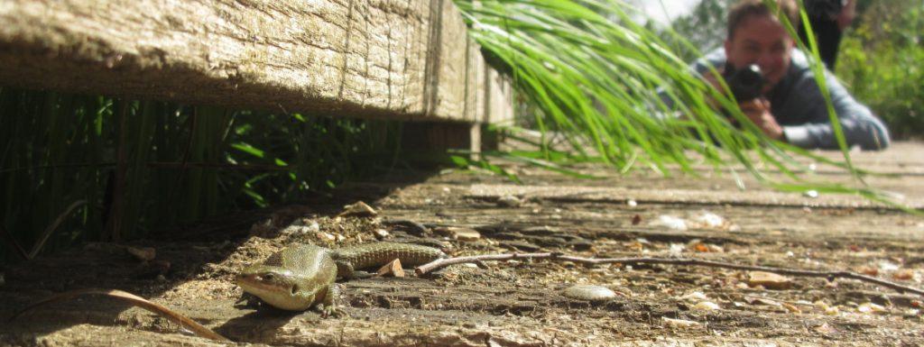 Week 19 Lizard