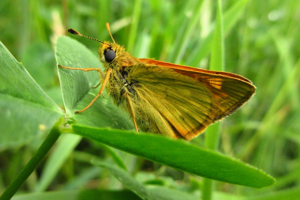 Week22 Skipper