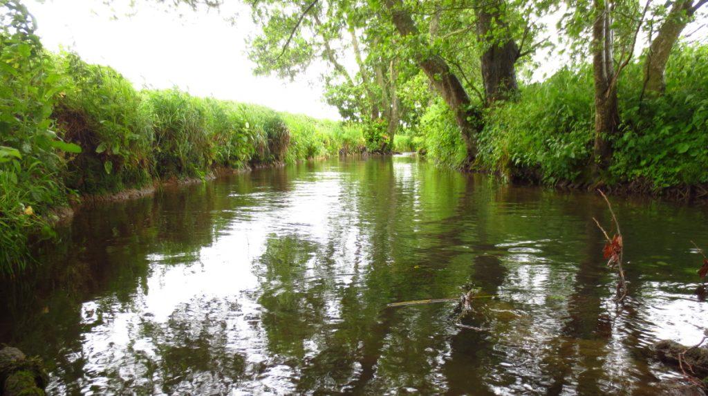 Week23 river