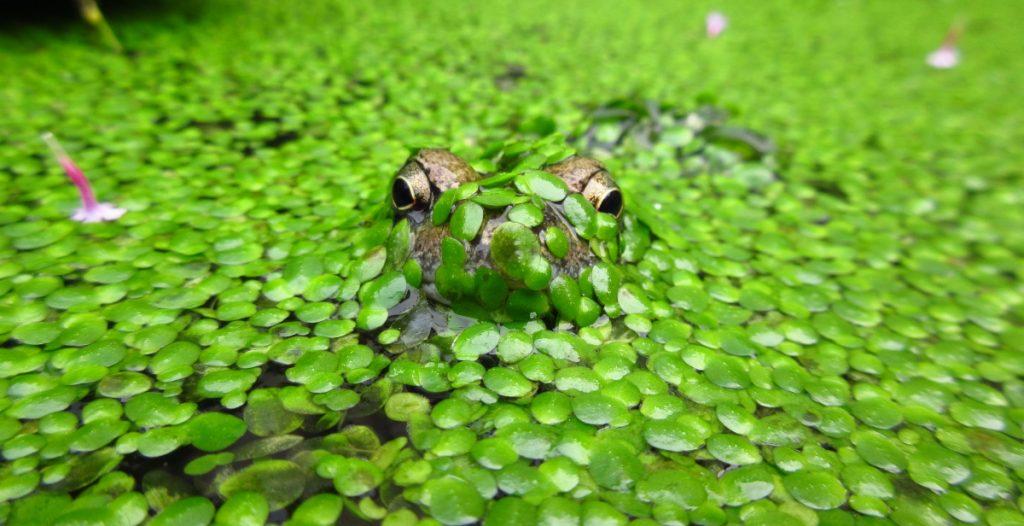 16 Oct Frog