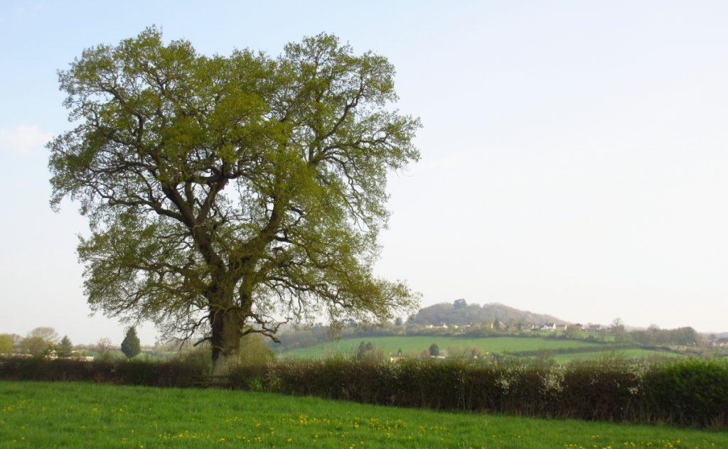 21 April Tree3