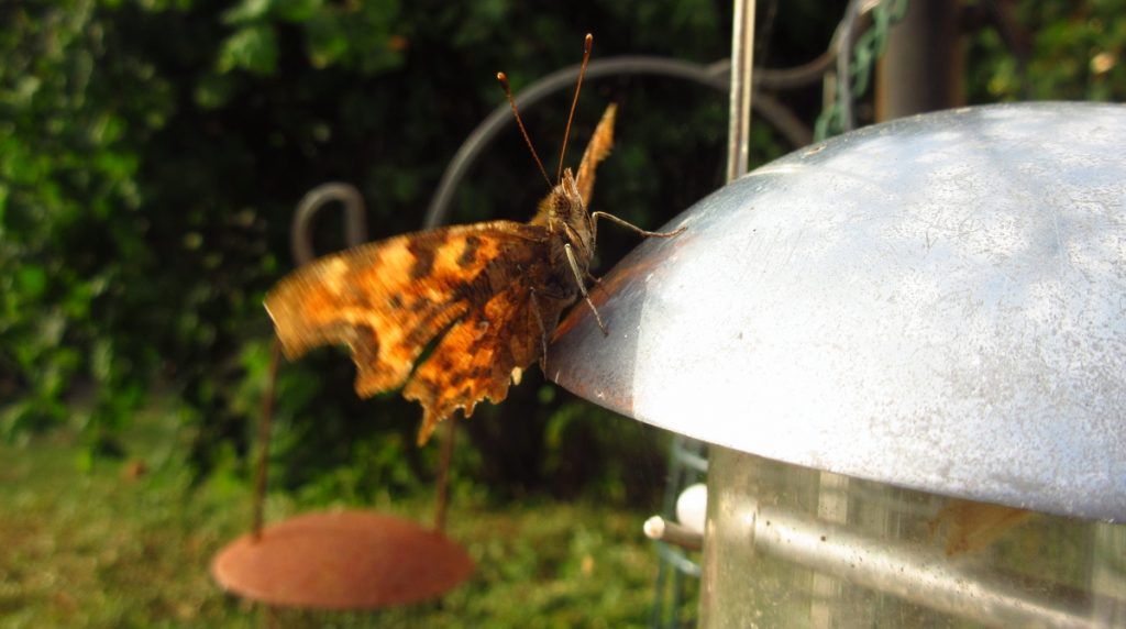 6th August Comma