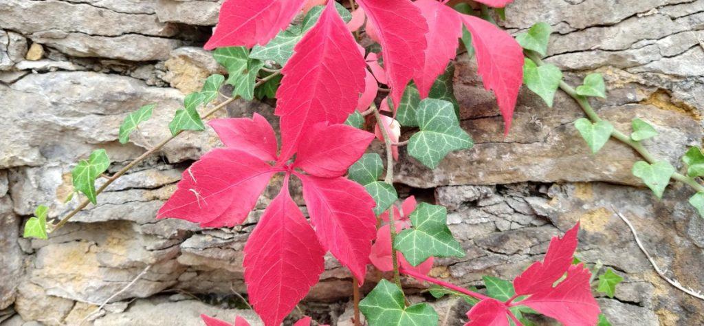 Climbing colour