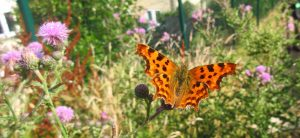 Comma 18th July