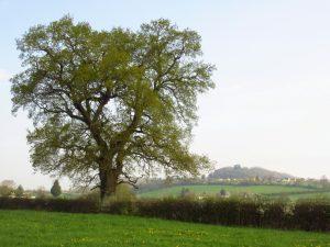 Tree April
