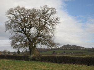 Tree Nov