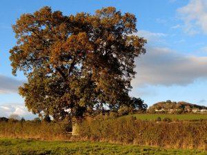 Tree Oct
