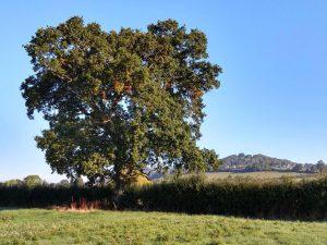 Tree Sept