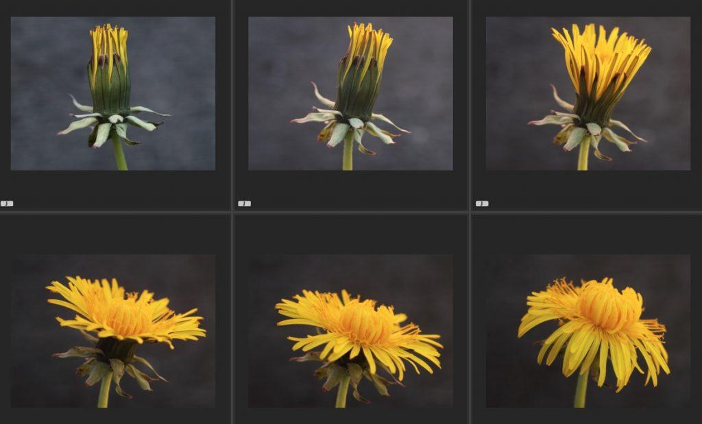 Flower Ext seq