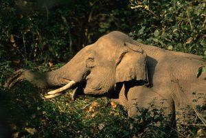 I Green Elephant